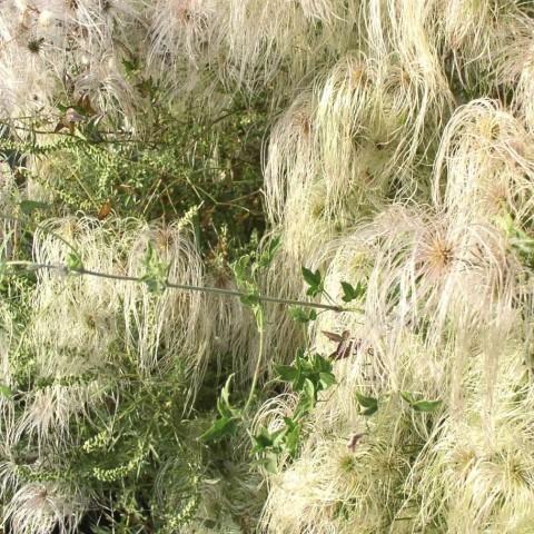 معلومات عن نبات الحزازيات
