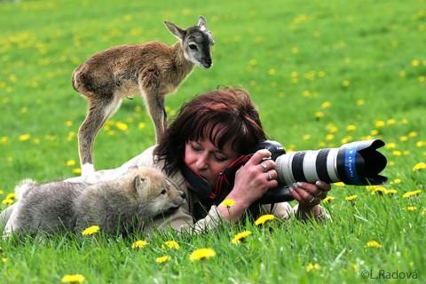 24 سبب يجعلك تستقيل من مهنتك وتعمل كمصور للحياة البرية