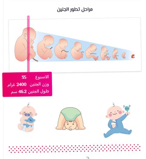 دليل الحامل - تصميم وتطوير حاسبة الحمل وجنس المولود